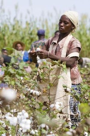 CmiA supports 75,000 cotton peasants in Mozambique
