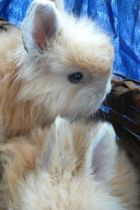 SumOfUs.org: 255,000 people demand Zara immediately pull angora products