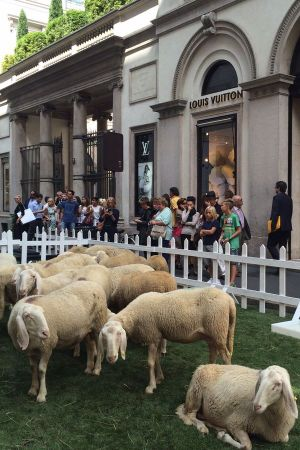 Sheep invasion in Milan's luxury shopping street Via Montenapoleone