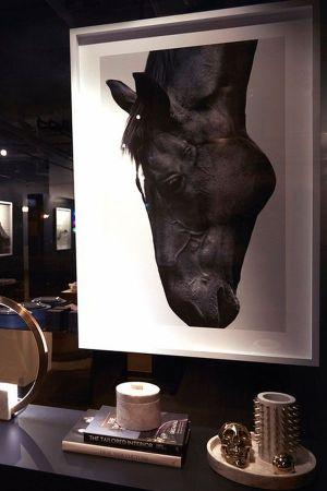 Window display featuring The Horse photograph by Sarah McColgan