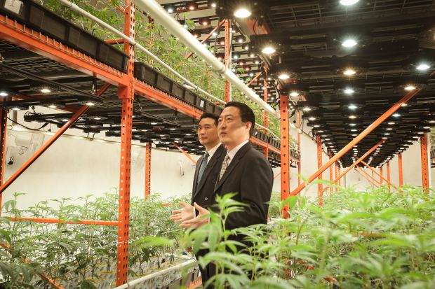 Inside Alkhemist's cultivation facility