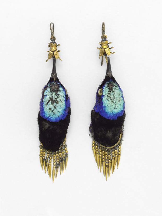 Earrings made from heads of red-legged honeycreeper birds, circa 1875
