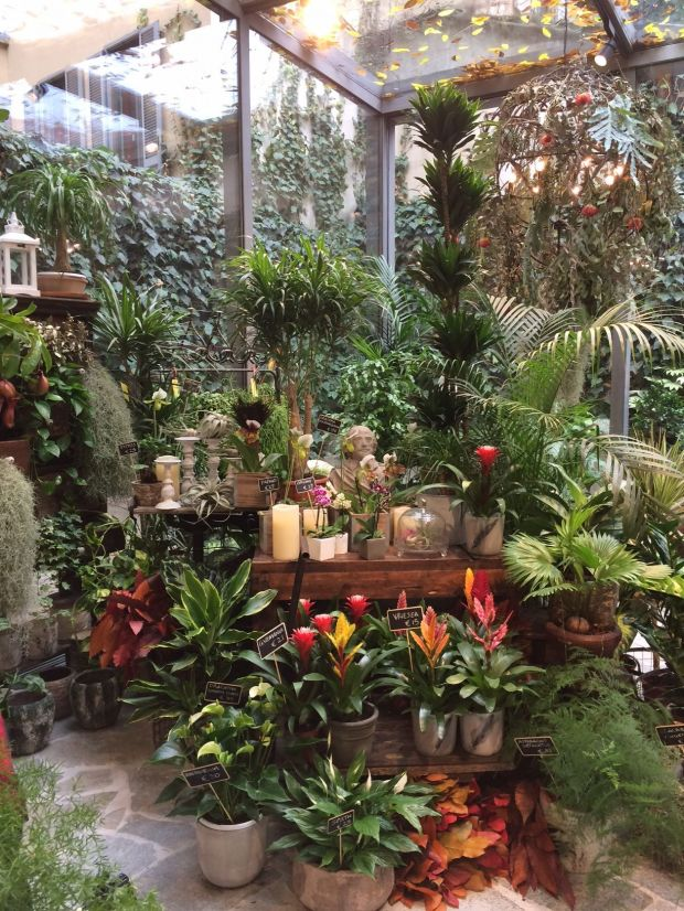 Japanese exotic plant shop by Green Fingers
