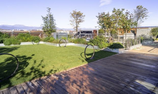 Green Pea rooftop garden