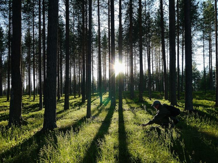 How Finland wants to save the textile world