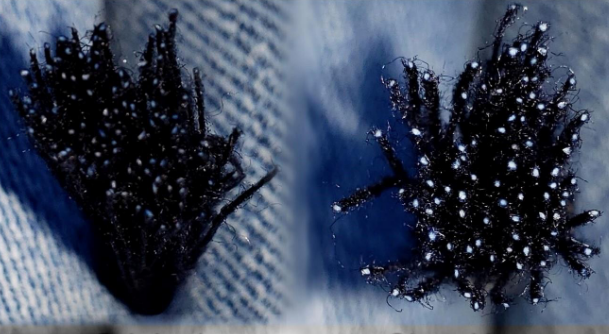 From left: Regular indigo dyed yarns compared with yarns treated with Archroma CleanKore technology