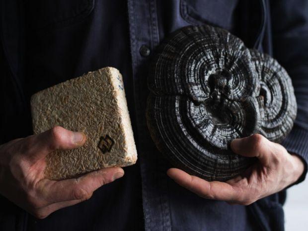 Mycelium material and a reishi mushroom