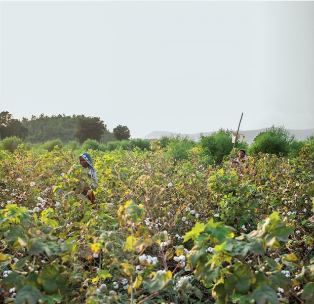 Indian regenerative organic farm supplying Patagonia